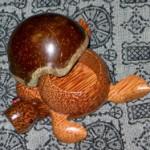 2004年皐月のかめ02